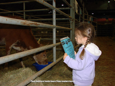 Viewing Longhorns at a sale